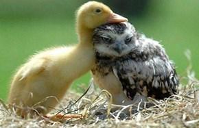 Snugly friend