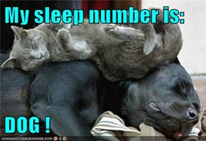 My sleep number is:  DOG !