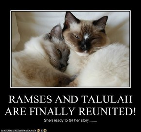 RAMSES AND TALULAH ARE FINALLY REUNITED!