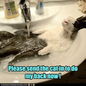 Please send the cat in to do my back now !