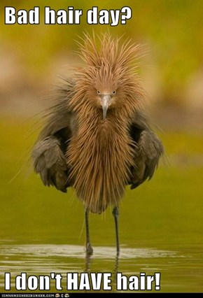 Bad hair day?  I don't HAVE hair!