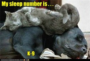 My sleep number is . . .