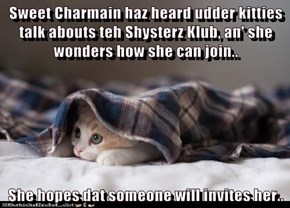 Sweet Charmain haz heard udder kitties talk abouts teh Shysterz Klub, an' she wonders how she can join..  She hopes dat someone will invites her..