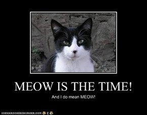 MEOW IS THE TIME!