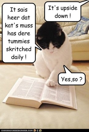 It sais heer dat kat's muss has dere tummies skritched daily !