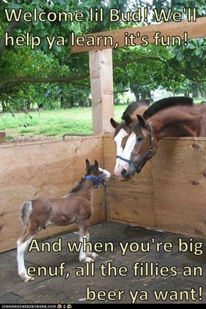 Welcome lil Bud! We'll help ya learn, it's fun!  And when you're big enuf, all the fillies an beer ya want!
