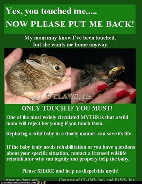 Helping Baby Critters