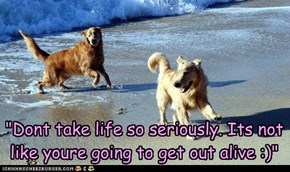 """Dont take life so seriously. Its not like youre going to get out alive :)"""