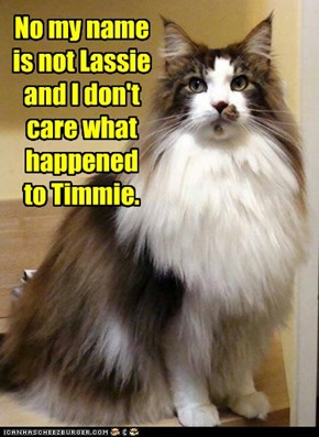 No my name is not Lassie and I don't care what happened to Timmie.
