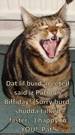 Dat lil burd ai eeted said iz Patblo's Biffiday! (Sorry burd, shudda talked faster...) happy to YOU!, Pat!