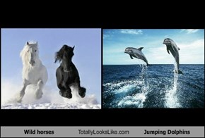 Wild horses Totally Looks Like Jumping Dolphins