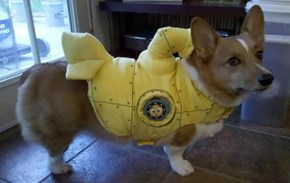 Yellow Corgmarine
