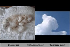 Sleeping cat Totally Looks Like Cat shaped cloud