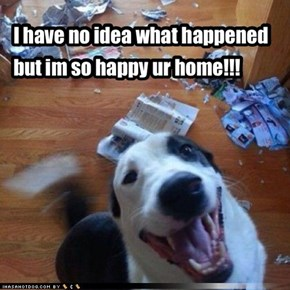 Happy Destructive Border Collie