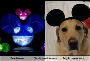 DeadMouse Totally Looks Like Dog in mouse ears