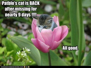 Patblo's cat is BACK after missing for nearly 9 days !!!!