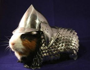 Guinea Pig Armor is the Most Amazing Pet Accessory Ever