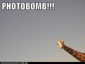 PHOTOBOMB!!!