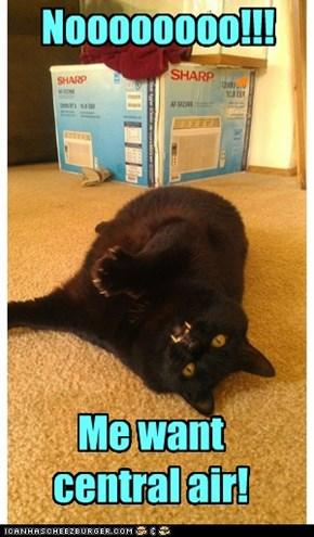 First World Basement Cat Problems