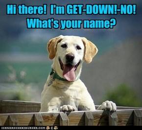 Hi there!  I'm GET-DOWN!-NO!