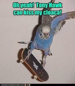 Oh yeah!  Tony Hawk can kiss my cloaca!
