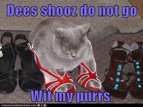 Dees shooz do not go  Wit my purrs.
