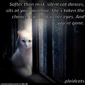 Softer than mist, silent cat dances, sits at your window. She's taken the chance. You look in her eyes. And you're gone.  plaidcats