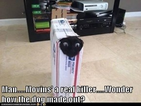 Man.....Movins' a real killer.....Wonder how the dog made out?