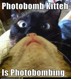 Photobomb Kitteh  Is Photobombing