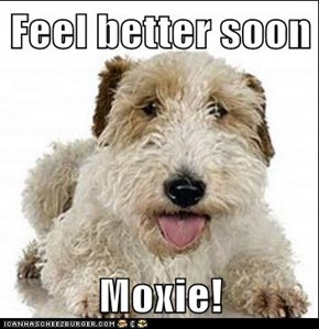 Feel better soon  Moxie!