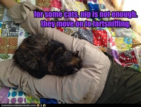 for some cats, nip is not enough. they move on to fartsniffing.
