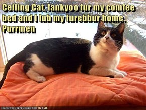 Ceiling Cat, fankyoo fur my comfee bed and I lub my furebbur home.  Purrmen
