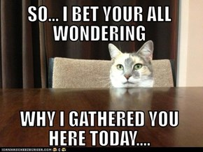 """when my cat wants to """"talk"""""""