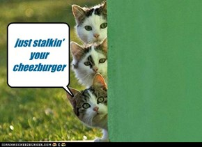 nekos stalking my cheezburger
