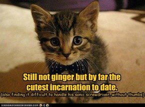 Still not ginger but by far the cutest incarnation to date.