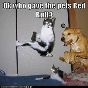 Ok who gave the pets Red Bull?