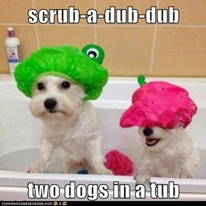 scrub-a-dub-dub  two dogs in a tub