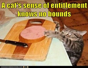 A cat's sense of entitlement knows no bounds