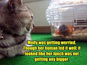 Molly was getting worried. Though her human fed it well, it looked like her lunch was not getting any bigger.