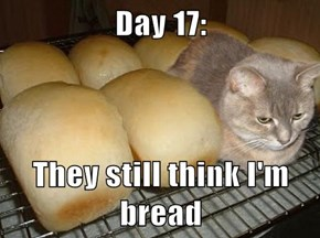 Day 17:  They still think I'm bread