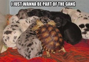 Turtle Wants to Be Part of the Pack
