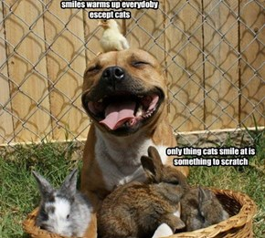 smiles for everyone , except for cats
