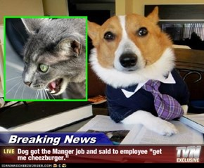 "Breaking News - Dog got the Manger job and said to employee ""get me cheezburger."""