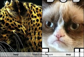 herp Totally Looks Like derp