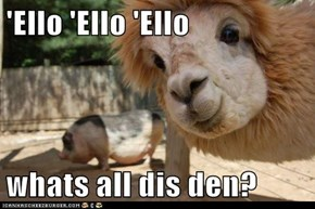 'Ello 'Ello 'Ello  whats all dis den?