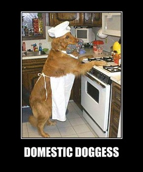 DOMESTIC DOGGESS