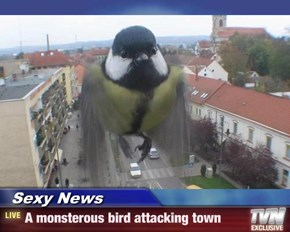 Sexy News - A monsterous bird attacking town