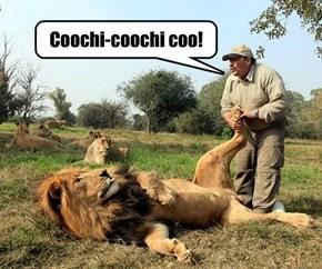 Lion Tickler