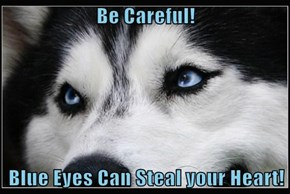 Be Careful!   Blue Eyes Can Steal your Heart!