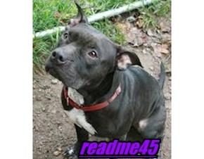 readme45